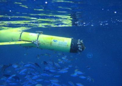 Teledyne WEBB RESEARCH autonomer Unterwassergleiter SLOCUM, trägt unterschiedliche Sensoren, beschreibt eine ondulierende Bewegung durch die Wassersäule, sendet Daten bei  jedem Auftauchen per Satellit und erreicht ein vorprogrammiertes Ziel ohne elektrischen Antrieb